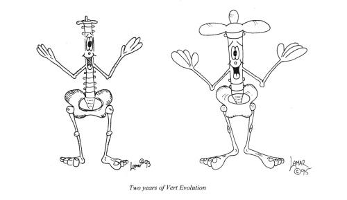Evolution of Vert
